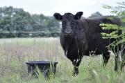 Unsere Rinder